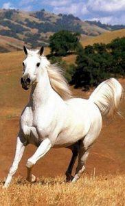 Fiscalité chevaux de courses