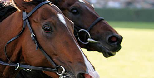 Fiscalité chevaux de course
